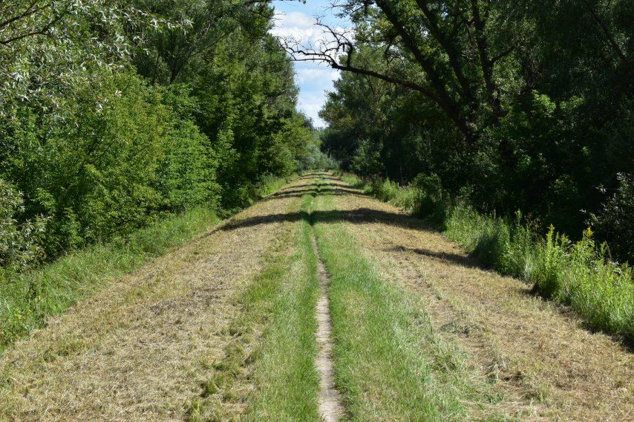 ścieżka na walę nadwiślańskim