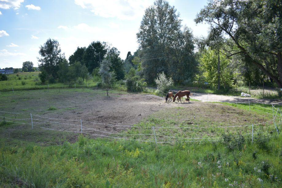 Dwa konie z pobliskiej stadniny